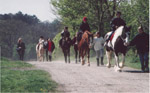 Country park hack, Epsom